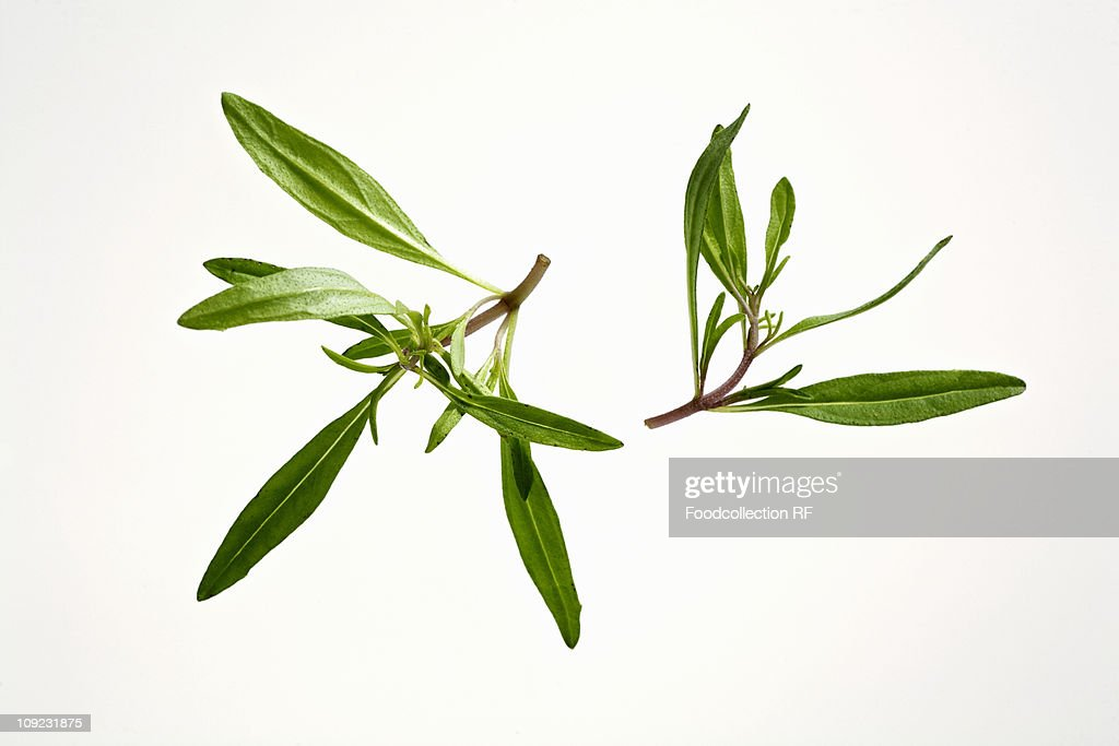 Fresh tarragon on white background, close-up