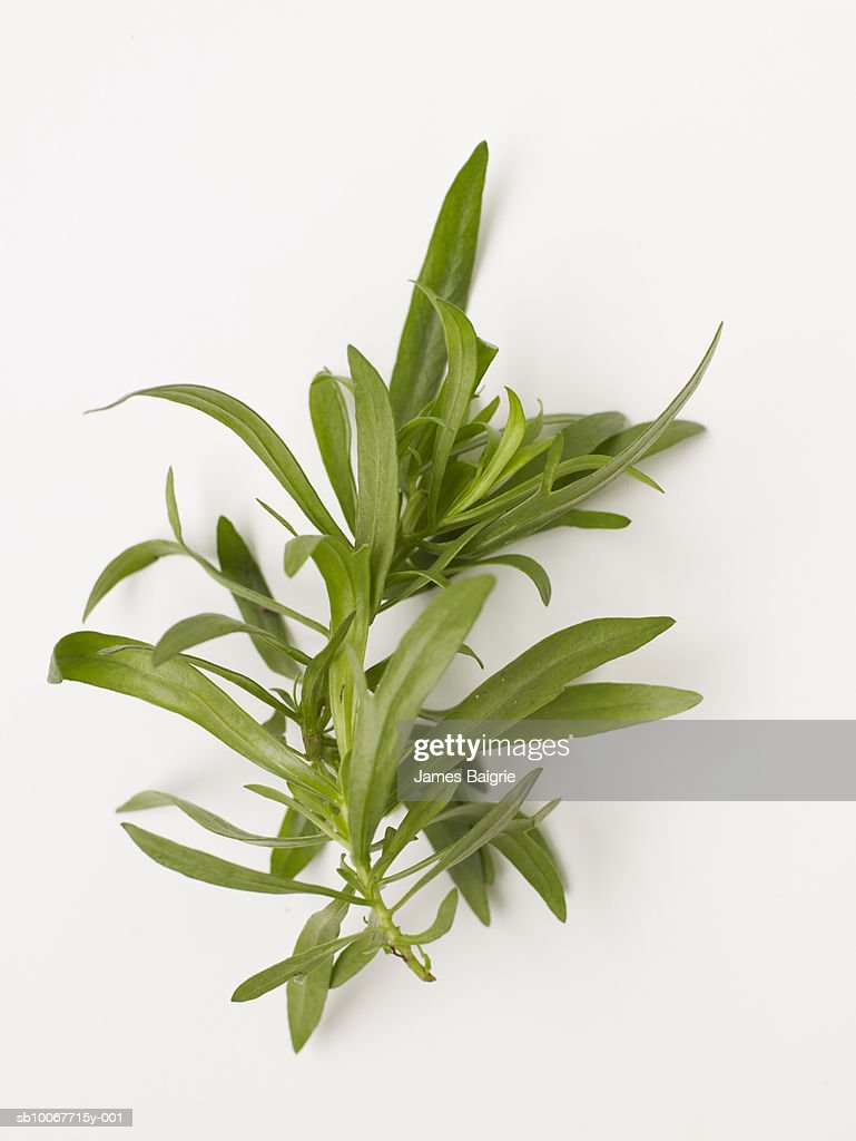 Fresh tarragon on white background