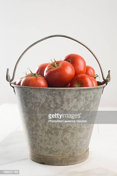 Fresh tomatoes in bucket