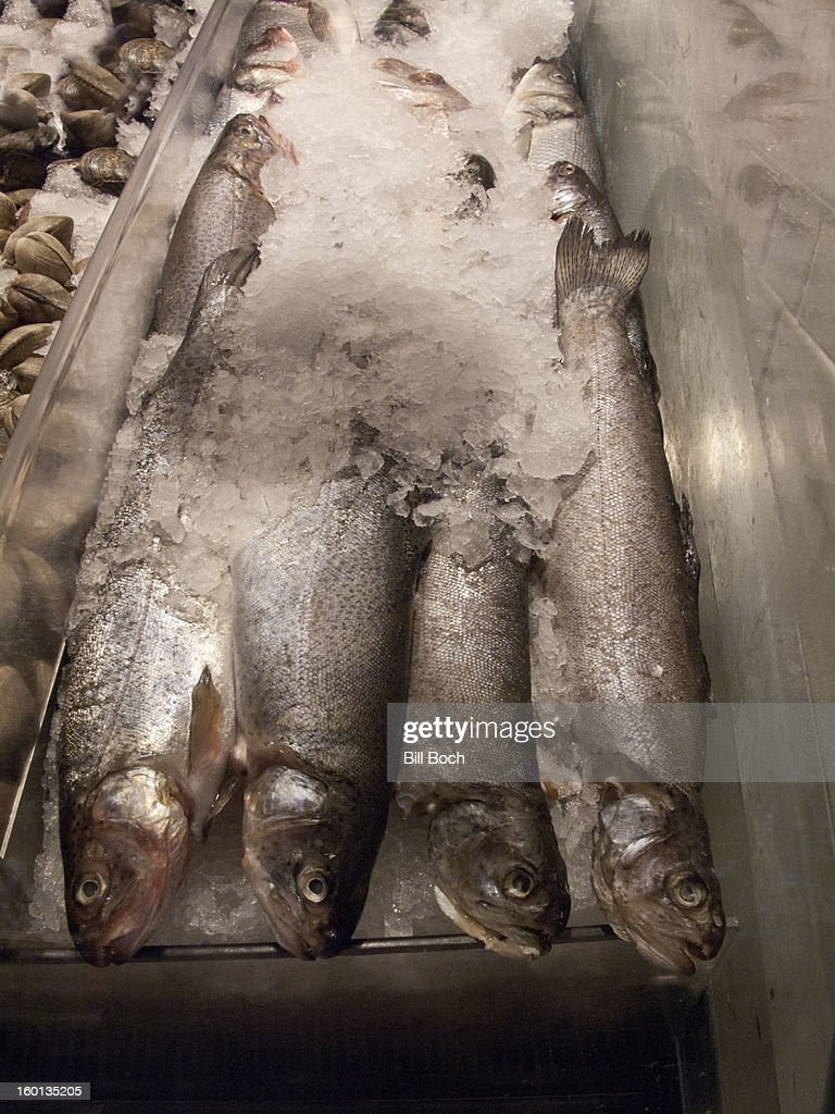 Fresh trout displayed at a fish market : Stock Photo