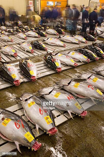 Fresh tuna in Tsukiji Market
