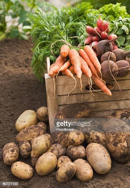 Fresh vegetables in crate