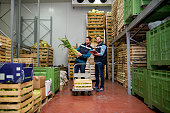 Fresh vegetables in warehouse