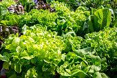 Fresh vegetables leaves background
