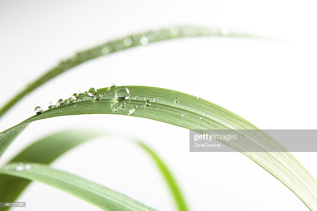 fresh water drop on green grass leaf nature outdoor isolated
