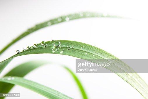 Queda de Água Doce na relva verde folha natural ar livre Isolada