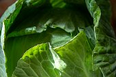 fresh white cabbage for salad.