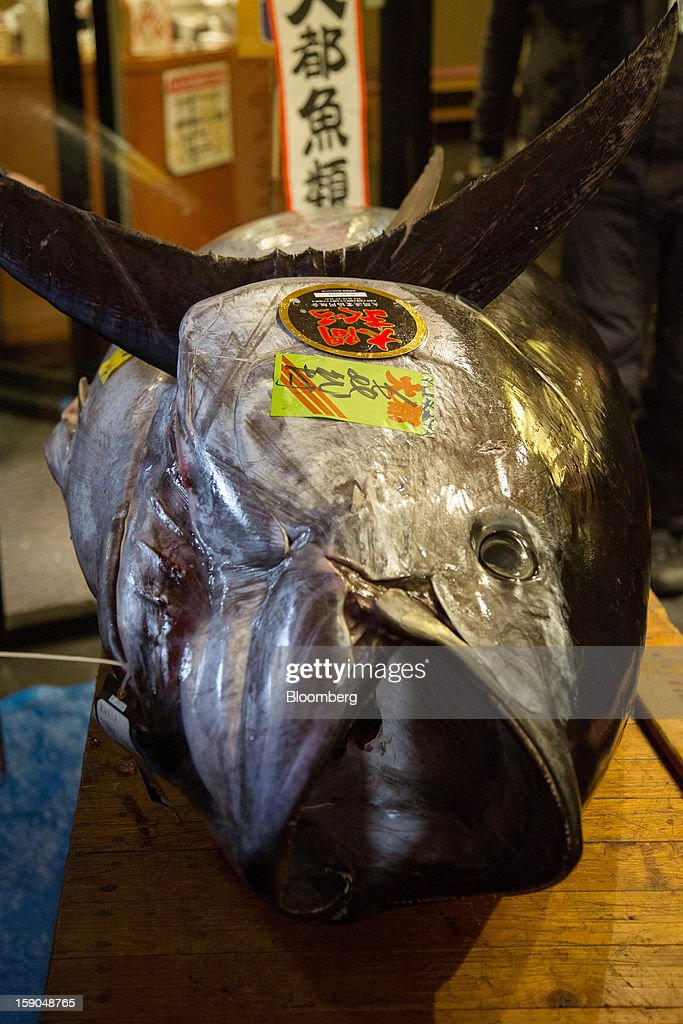 A fresh whole tuna weighing 222 kilograms (489 pounds) that sold at the year's first auction at Tsukiji Market for 155.4 million yen ($1.76 million) sits in a Sushi Zanmai sushi restaurant, operated by Kiyomura K.K., in Tokyo, Japan, on Saturday, Jan. 5, 2013. Kiyomura, a Tokyo-based sushi chain operator, outbid rivals for a second year in a row for the most expensive fish ever sold at the market, saying the purchase may help improve Japan-China relations. Photographer: Noriyuki Aida/Bloomberg via Getty Images