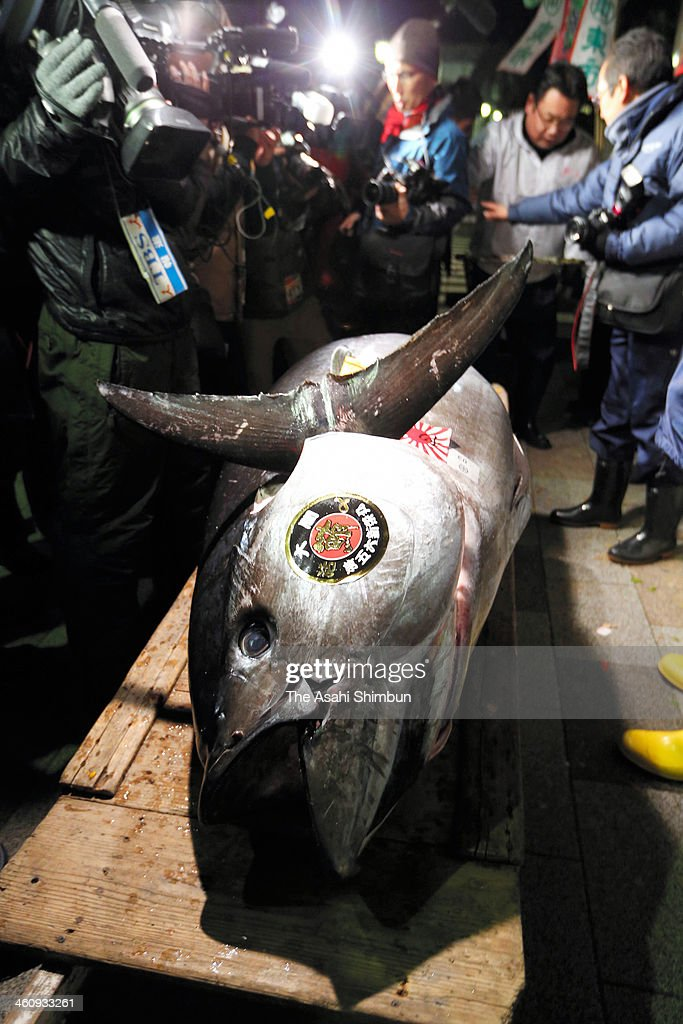 A fresh whole tuna weighing 230 kilograms (507 pounds), sold for 7.36 million yen ($70,000) at the year's first auction at Tsukiji Market on January 5, 2014 in Tokyo, Japan. The highest bidder was Kiyomura K.K., a Tokyo-based sushi chain operator.