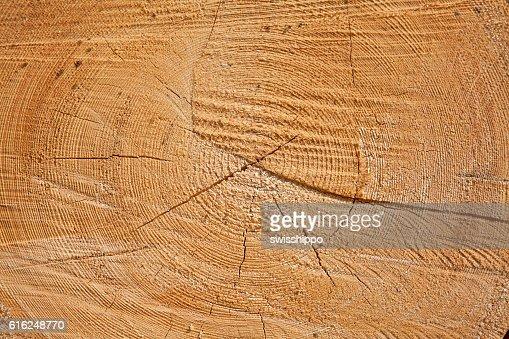 Fresh wooden studs : Stock Photo