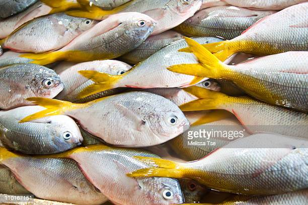 Fresh yellow tail fishes at fish market in Bali