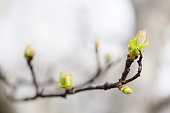 Fresh young greenery leaves tree branch. Spring time and new life concept. Soft focus, macro view shallow depth field.