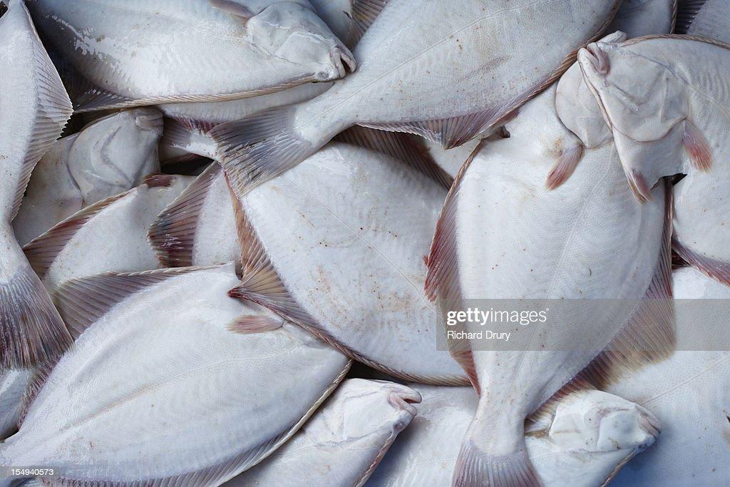 Freshly caught fish : Stock Photo