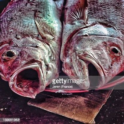 2 freshly caught red snappers in a plate : Stock Photo