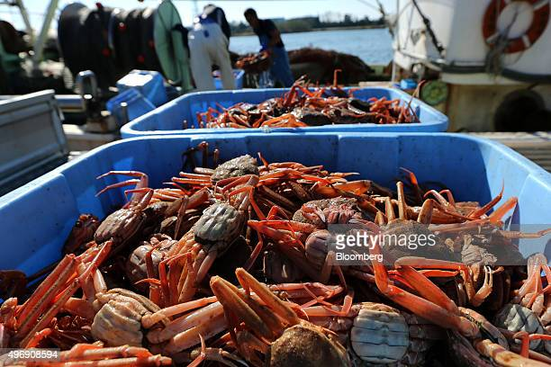 Freshly caught snow crabs sit in containers on a fishing boat at Mikuni Fishing Port in Mikuni Fukui Prefecture Japan on Friday Nov 6 2015 The ban on...