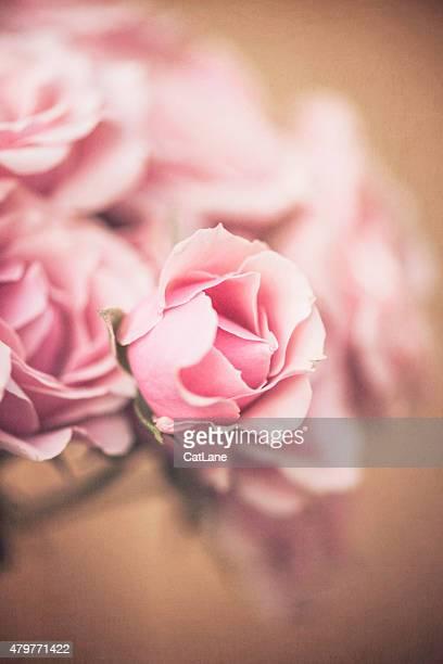 Freshly cut miniature pink rose bouquet