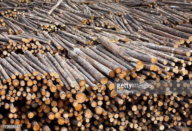 Freshly cut trees sit stacked before transport to the West Fraser Timber Co sawmill in Quesnel British Columbia Canada on Thursday July 11 2013 West...