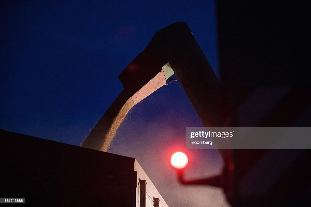 Freshly harvested wheat grain falls from a combine harvester at night in Wustermark, Germany, on Monday, Aug. 14, 2017. In Germany, problems with specific weight and Hagberg, a measure of baking quality, mean as much as 40 percent of wheat may have to go to the animal feed market this year. Photographer: Krisztian Bocsi/Bloomberg via Getty Images