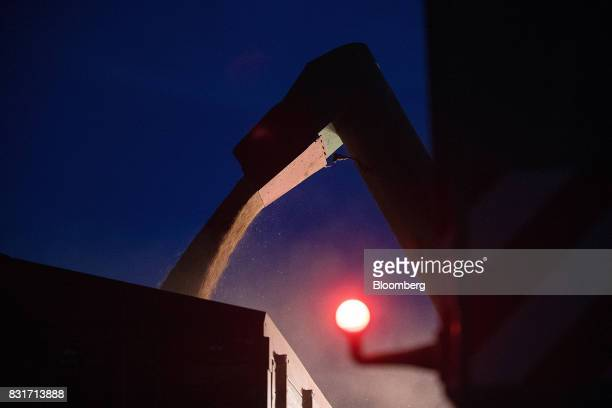 Freshly harvested wheat grain falls from a combine harvester at night in Wustermark Germany on Monday Aug 14 2017 In Germany problems with specific...