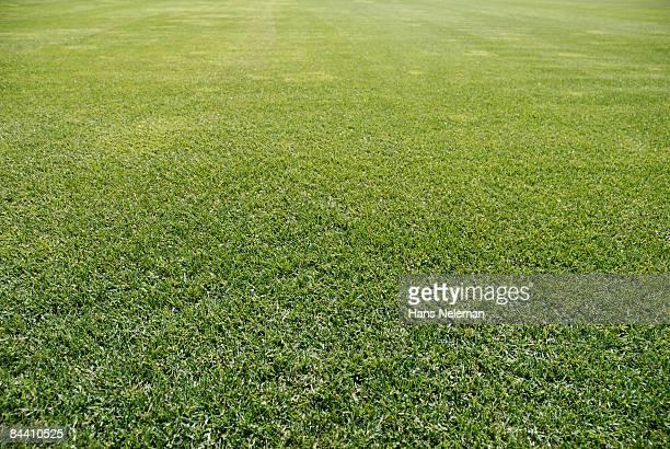 A freshly mowed grass field