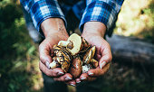 Walk in the autumn forest. A handful of fresh collected autumn forest mushrooms