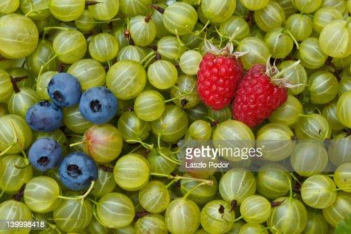 Freshly picked berries : Stock Photo