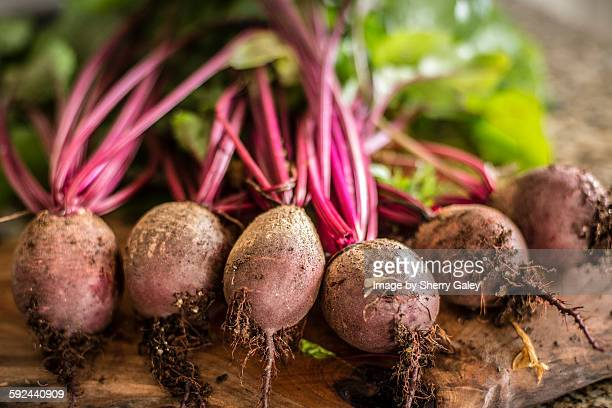 Freshly picked homegrown beets