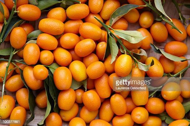 freshly picked Kumquat fruits with foliage