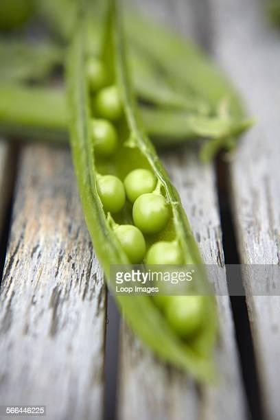 Freshly picked organic Pea pods