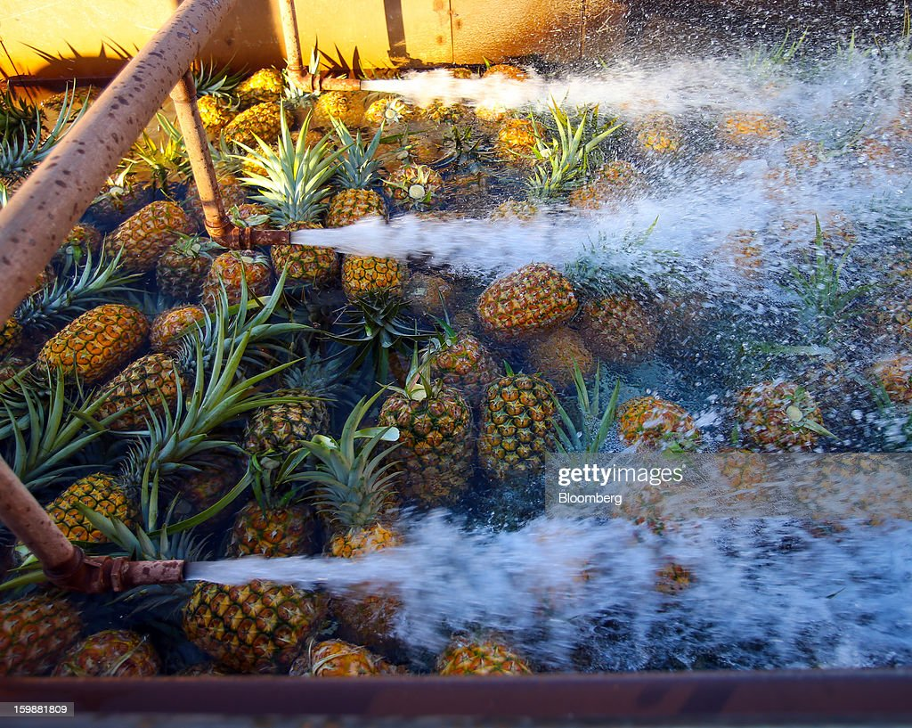 Freshly picked pineapples are thoroughly washed at the processing plant at the Dole Food Company Inc. plantation in Wahiawa, Hawaii, U.S., on Thursday, Jan. 17, 2013. Dole Food Company Inc. has evolved from a Hawaiian pineapple purveyor into the world's largest producer of fresh fruit and vegetables. Photographer: Tim Rue/Bloomberg via Getty Images