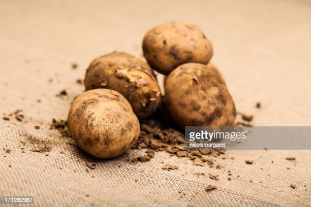 Freshly picked potatoes on hessian sack