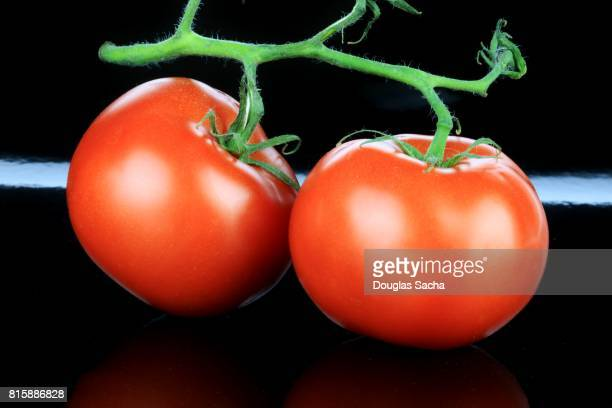 Freshly picked Tomato's on a black background (Solanum lycopersicum)