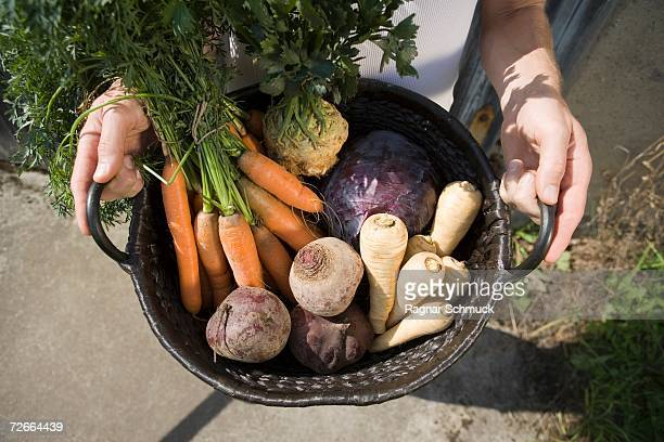 Freshly picked vegetables in a basket