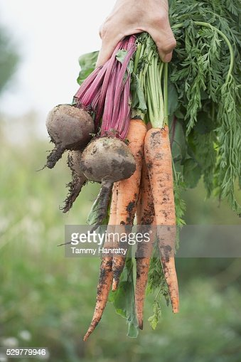 Freshly picked veggies : Bildbanksbilder