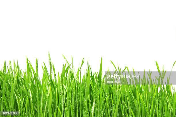 Freshly watered grassy field