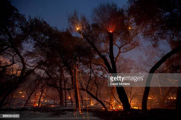 A freshlyburned forest is seen under the stars at the Lilac Fire in the early morning hours of December 8 2017 near Bonsall California Strong Santa...