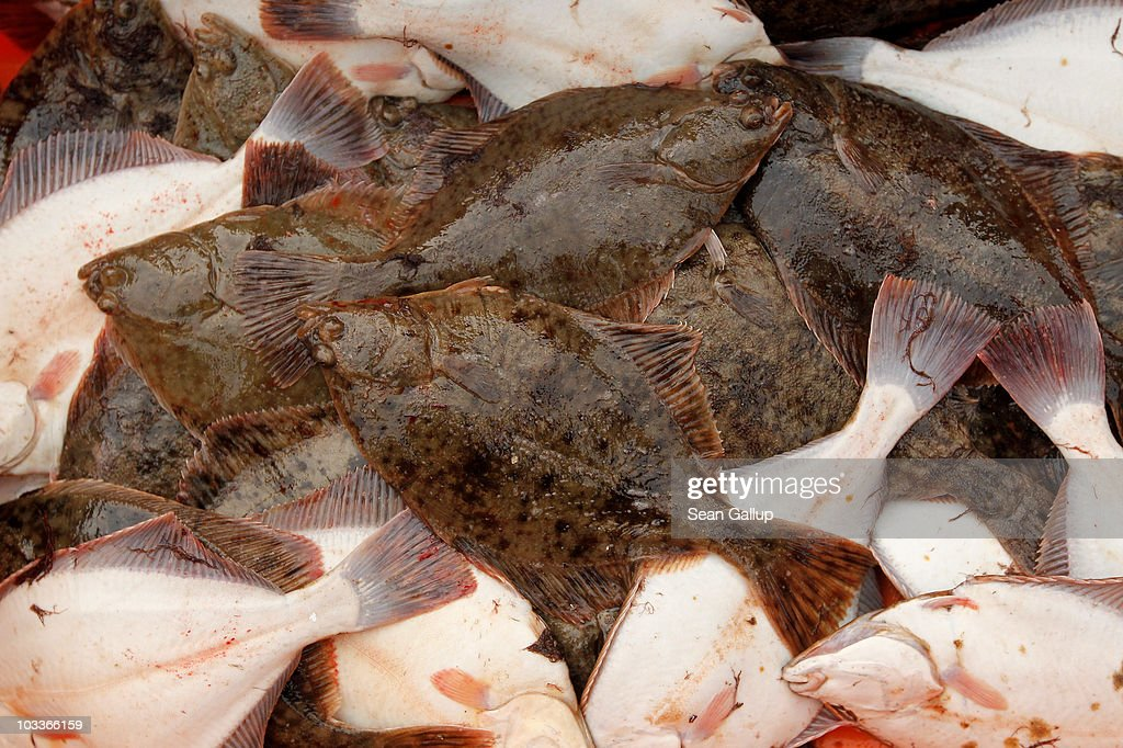 Freshlycaught plaice lie in a tub on board the fishing boat of veteran fishermen Reinhard Lay and Klaus Raack on August 13 2010 in the Baltic Sea...