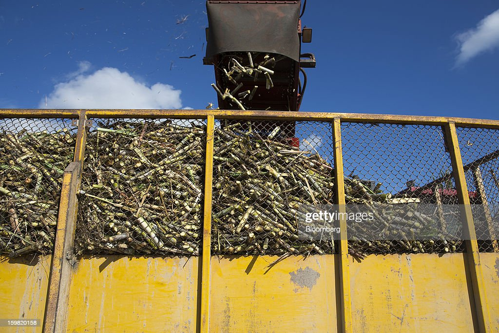 Freshly-cut cane falls from a sugarcane harvesting machine into a trailer during a harvest in a field near Jatibonico, Cuba, on Sunday, Jan. 13, 2013. Sugar prices fell 16 percent last year as global supplies are forecast to outpace demand for a third year in 2012-13, according to the London-based International Sugar Organization. Photographer: Andrey Rudakov/Bloomberg via Getty Images