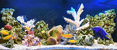 Freshwater aquarium with cichlids in style - pseudo-sea