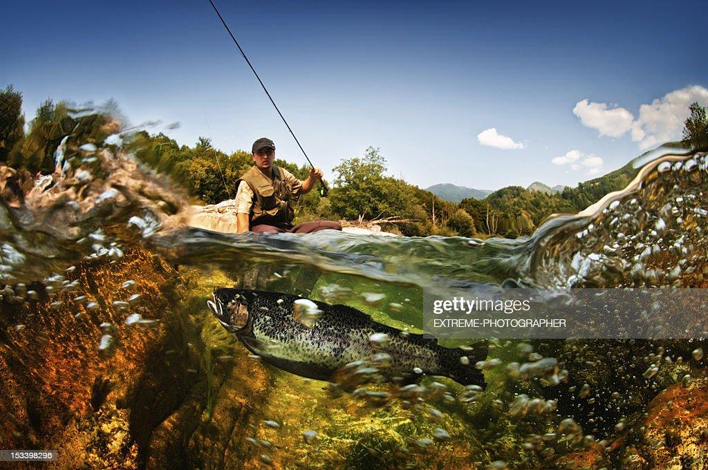 Freshwater fish : Stock Photo