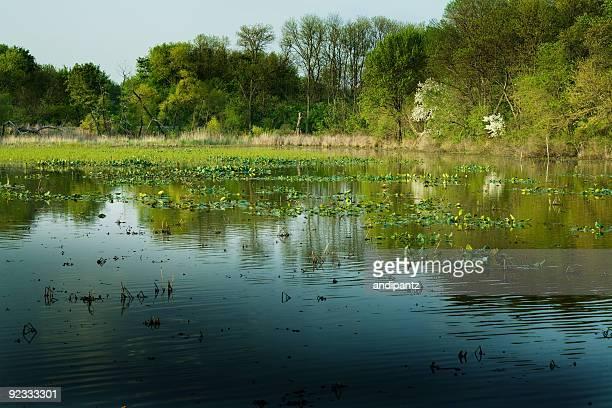 freshwater tidal wetland