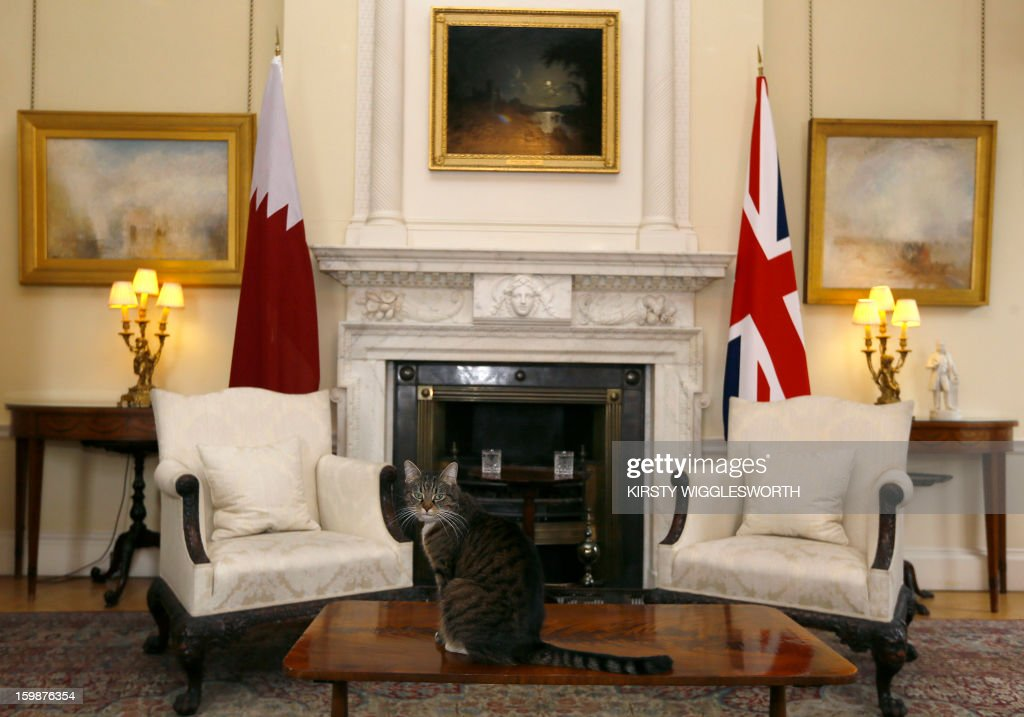 Freya, British Chancellor of the Exchequer George Osborne's cat, sits on a table in a room in Downing Street where a meeting between Britain's Prime Minister David Cameron and Emir of Qatar Sheikh Hamad bin Khalifa al-Thani was shortly due to take place at 10 Downing Street in central London on January 22, 2013. AFP PHOTO / POOL / KIRSTY WIGGLESWORTH