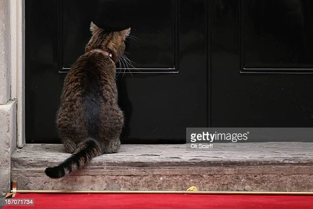 Freya the cat owned by Chancellor of the Exchequer George Osborne waits to be let into Number 10 Downing Street on November 28 2012 in London England