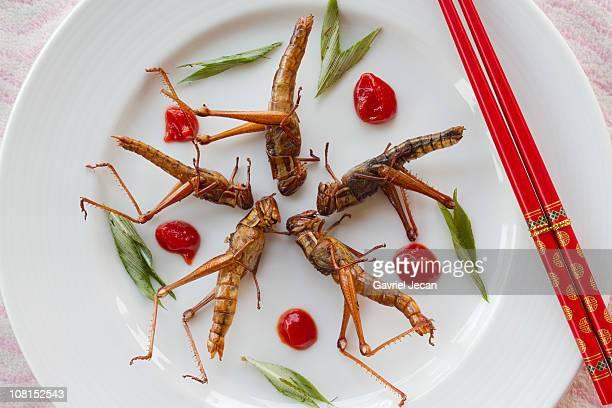 Fried Grasshoppers (Caelifera)