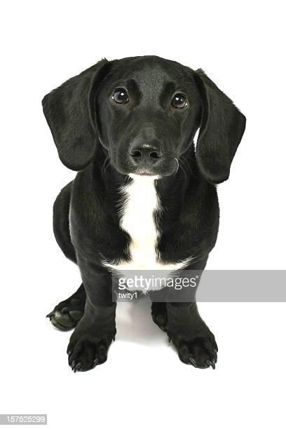 Friendly Dog