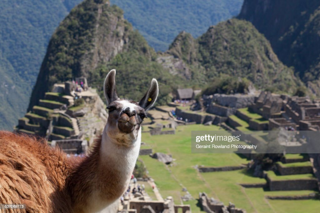 A Friendly Face on Top of Machu Picchu
