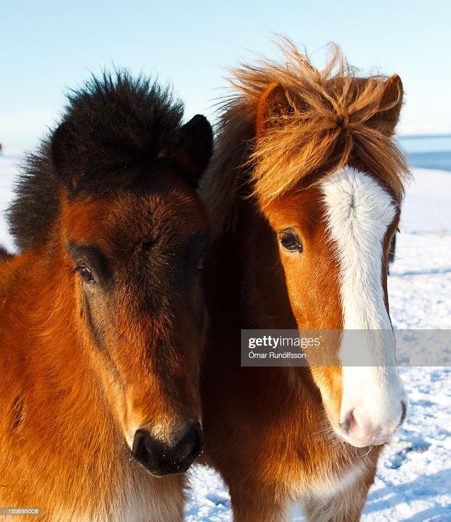 Friends at Melaleiti : Stock Photo