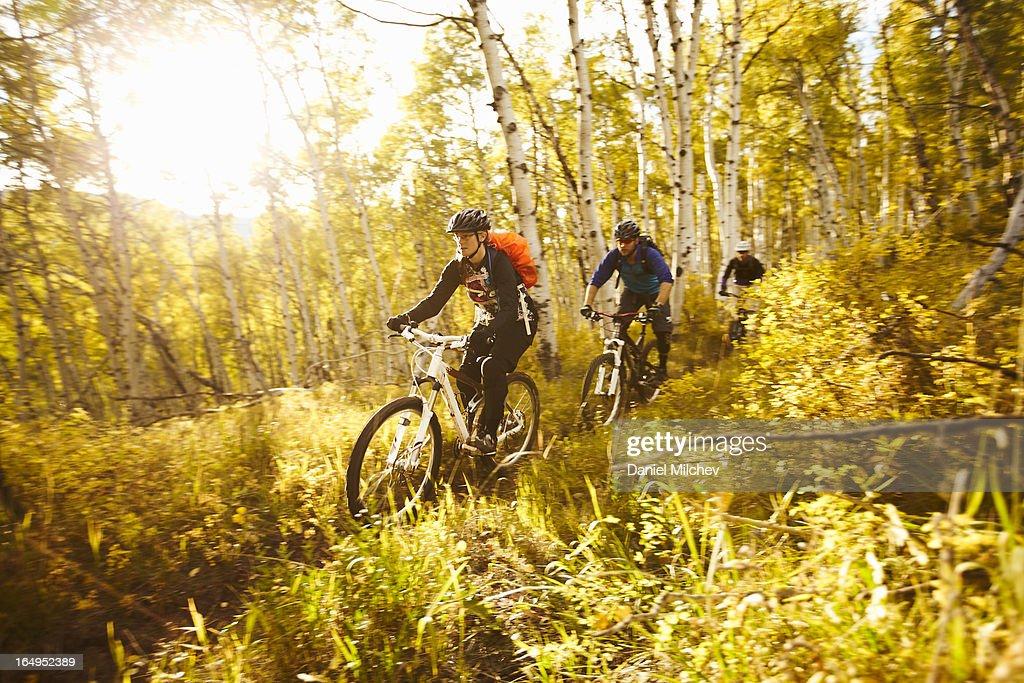 Friends riding bikes through aspen trees at sunset