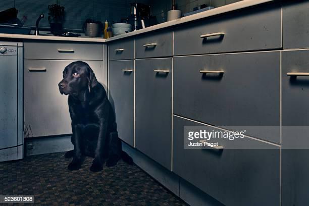 Frightened Dog in Corner of Kitchen