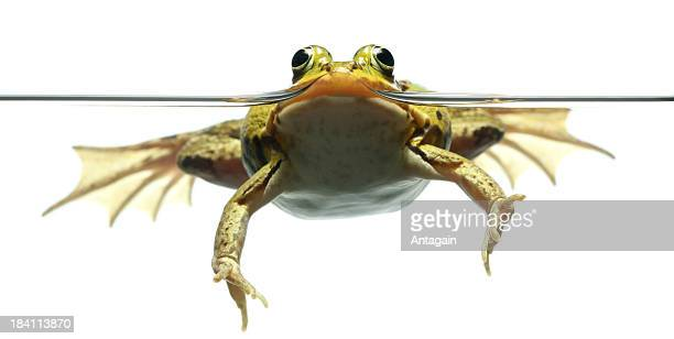 frog and water